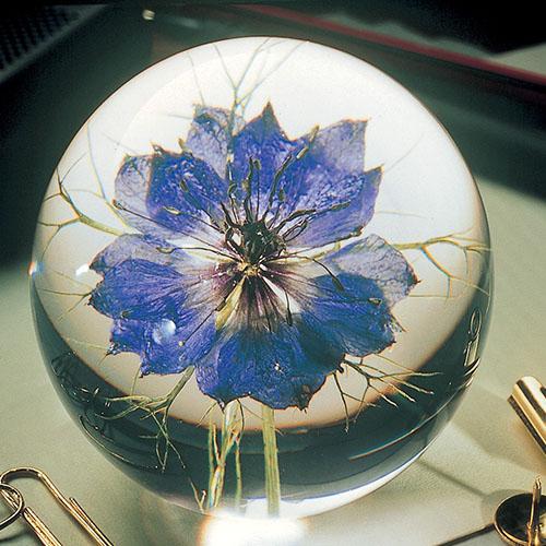 Nigella Flower (Small) Gallery Image 1
