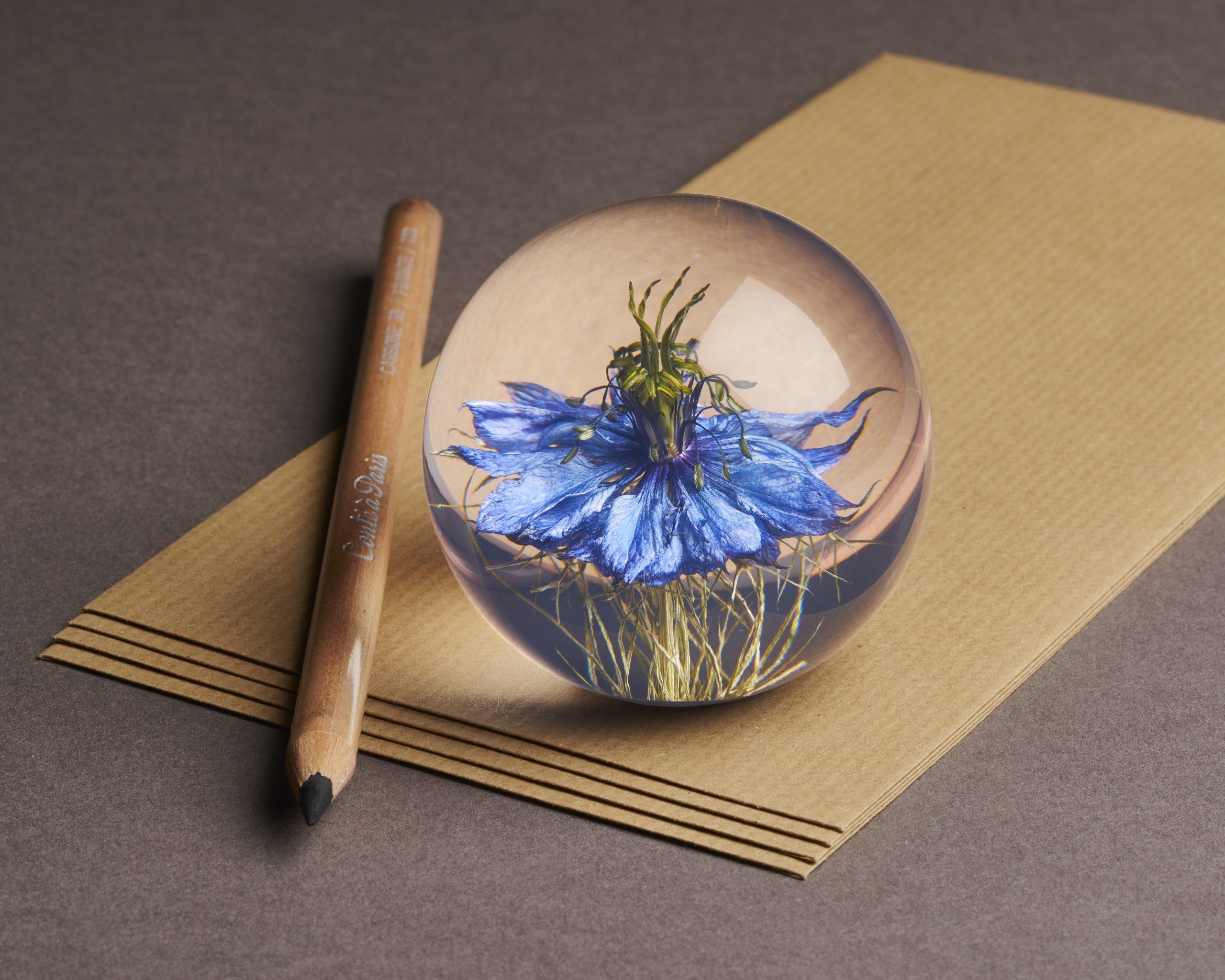 Nigella Flower (Small)