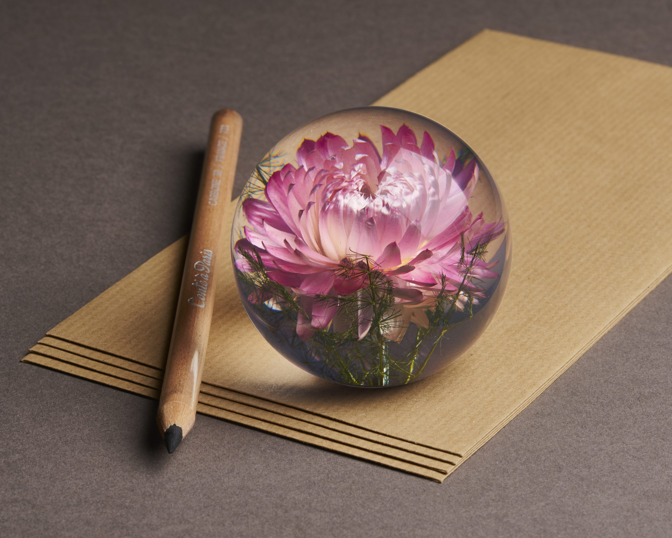 Helichrysum Pink Gallery Image 1
