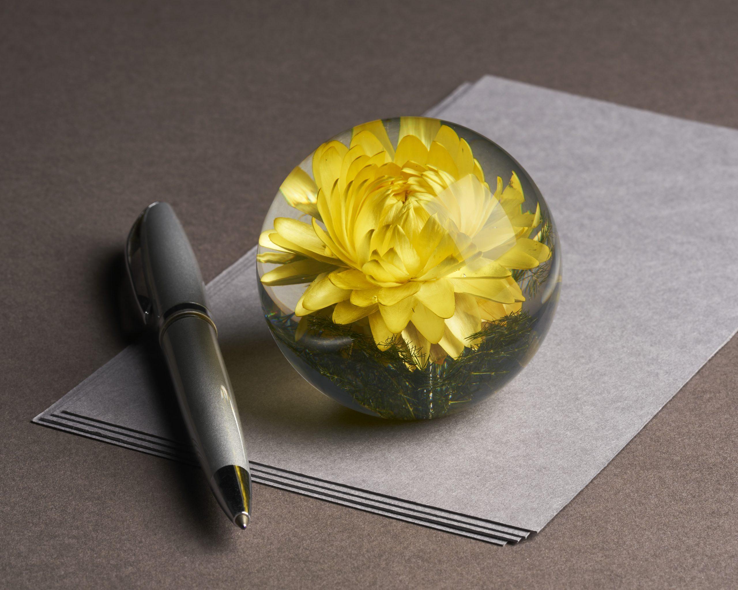 Helichrysum Yellow (small)